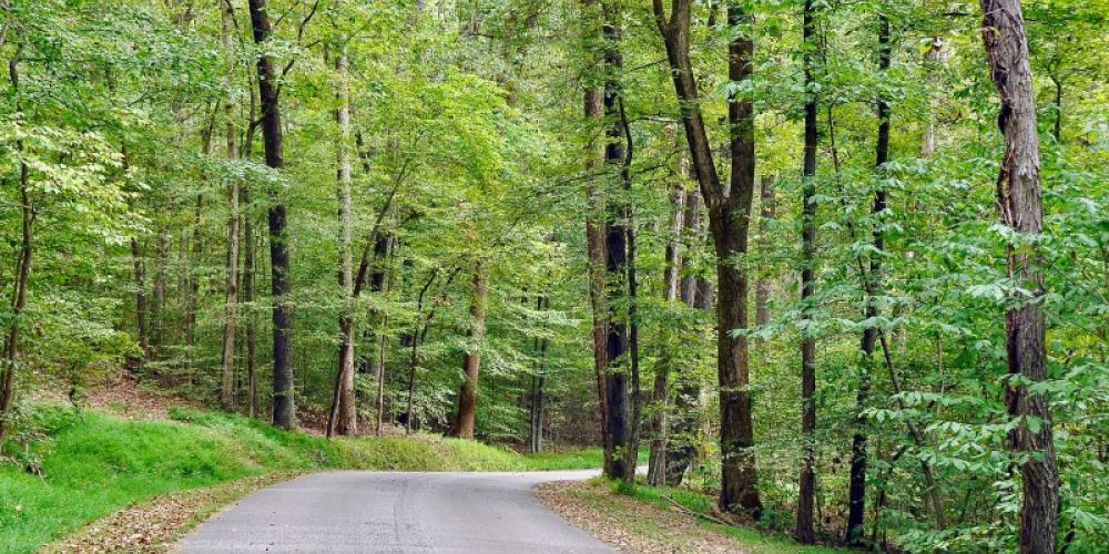 Enjoy miles of scenic roads with luscious, thick forests that are perfect for wiling away the afternoon. – Jean Owens