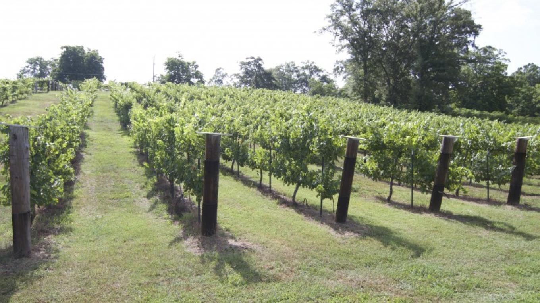 Maraella Winery is located in Hokes Bluff, Alabama. – Brad Wiegmann
