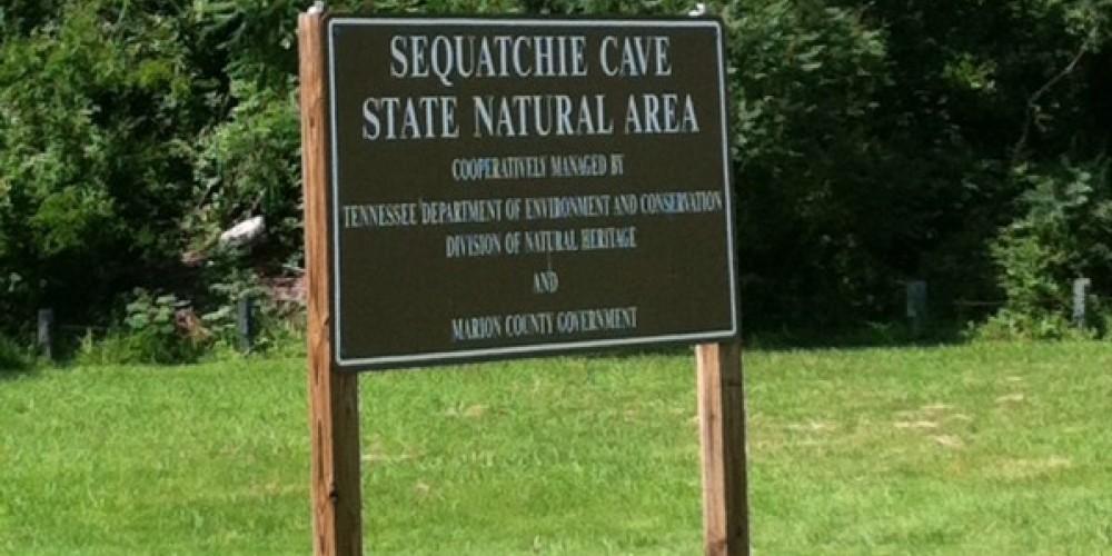 Sequatchie Cave, a pristine aquatic setting, was designated as a Class II natural-scientific state natural area in 2001. – Jenni Frankenberg Veal