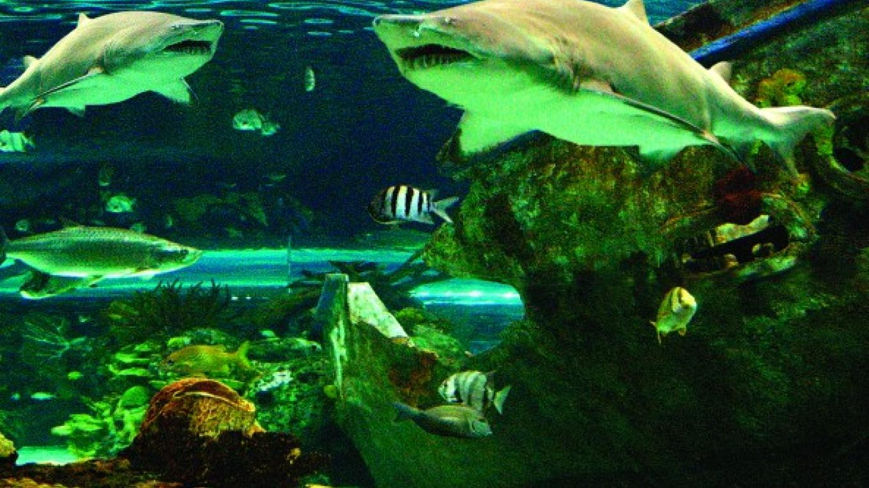 Shark Lagoon – Charlie Brooks