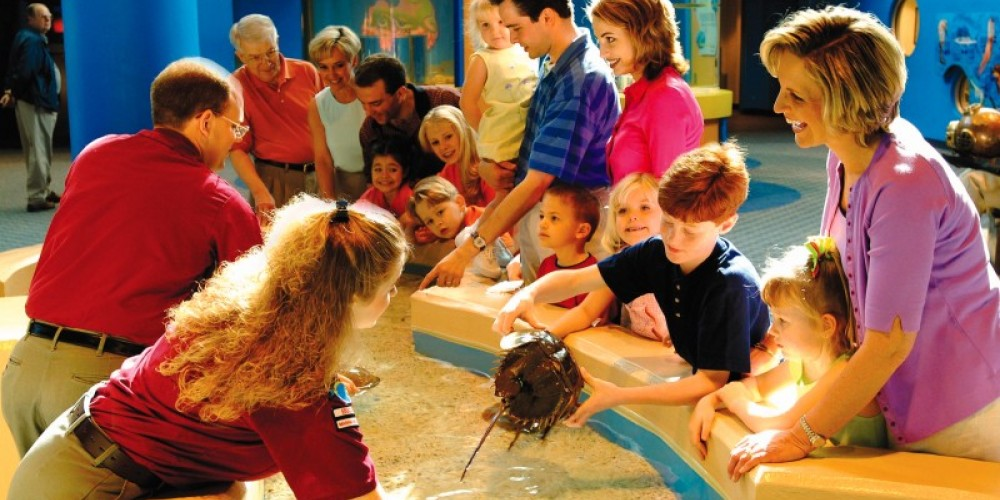 Horseshoe Crab Touch Tank in the Discovery Channel – Charlie Brooks