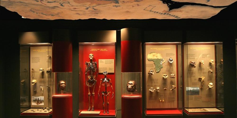 Permanent exhibit - Human Origins: Searching for Our Fossil Ancestors