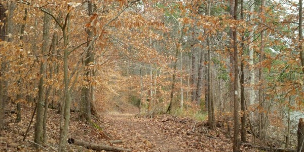 Honey Comb Small Wild Area and Trail – TVA