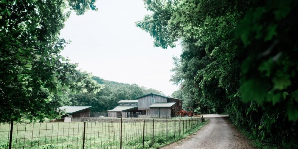 Bonnie Blue Farm – Cari Griffith
