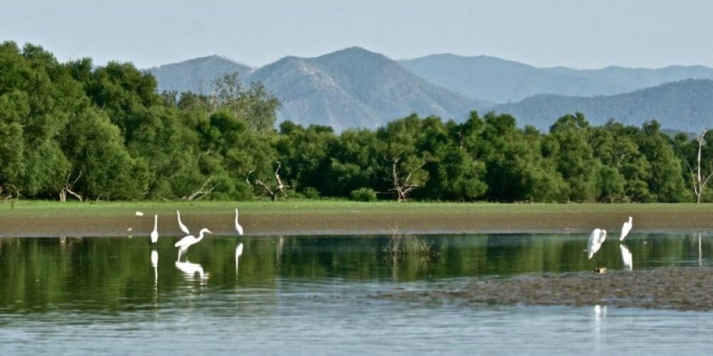 Great egrets at Rankin Bottoms, French Broad River, Cocke County – Michael Sledjeski