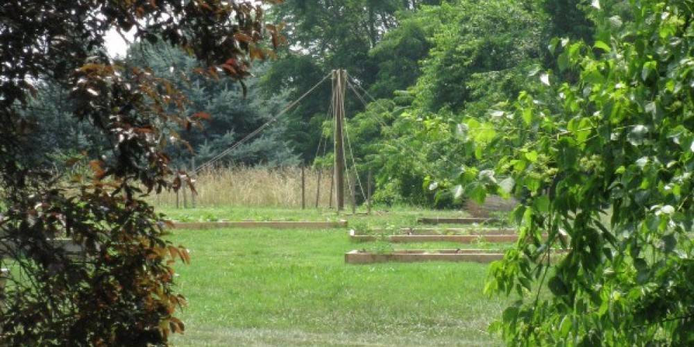 Organic Raised Beds feature heirloom varieties. – Candy Durman