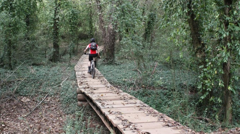 Bridge at Marie Myers Park – Elle Colquitt