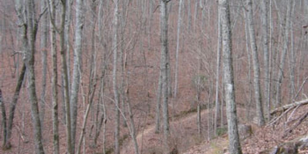 Pinhoti Trail at Snake Creek Gap – Google Images