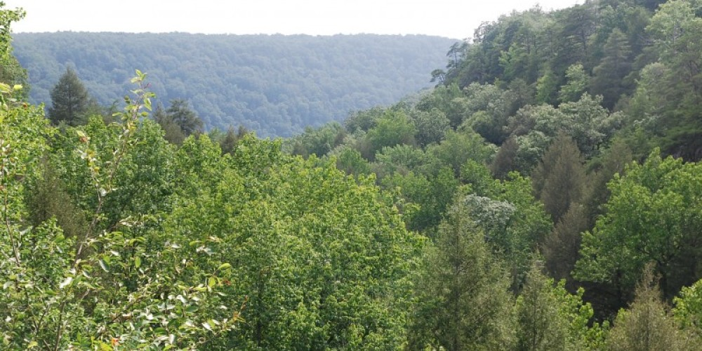 Looking out into the gorge from Foster Falls SWA – State Photo