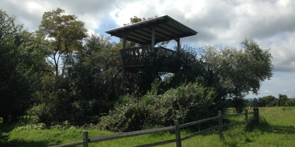 Picture of the Elk Tower located off the TWRA trails