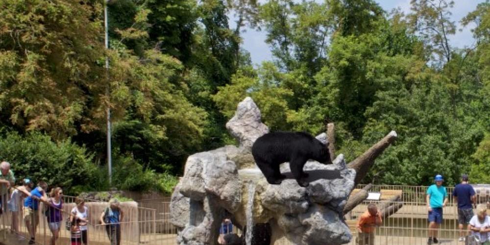 Ober Gatlinburg's Wildlife Encounter – Ober Gatlinburg