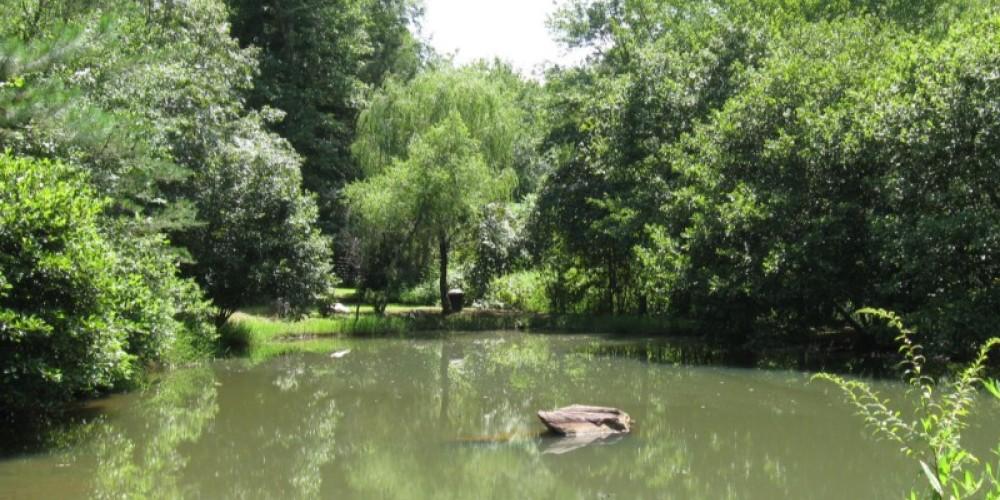 Stocked Fishing Pond – Patricia Scott