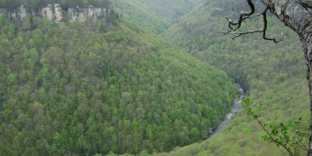 View of North Chickamauga Creek Gorge – Larry Cook