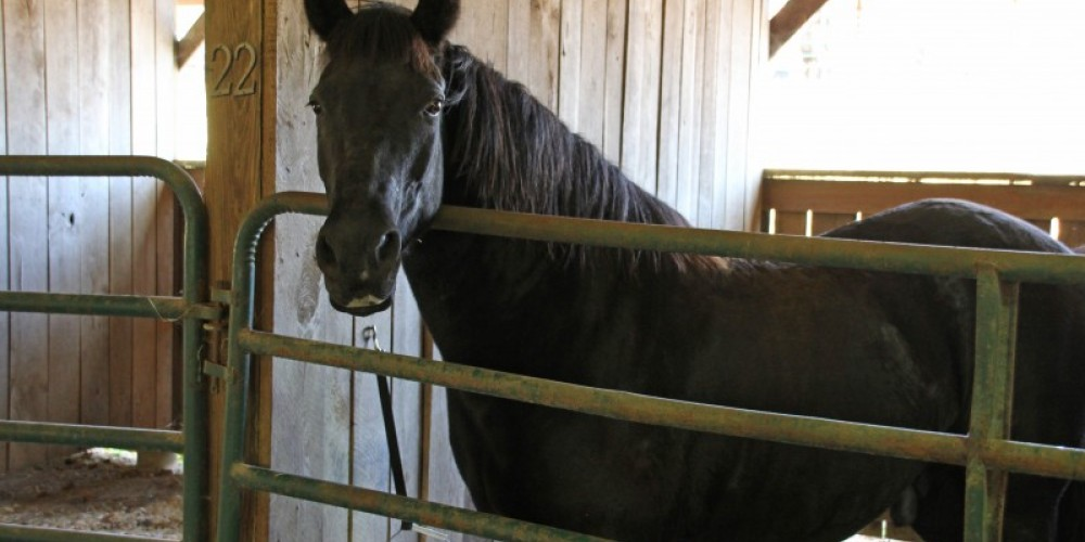 Horse barns at Loretta Lynn Ranch – Lance Goodman- Courtesy of Humphery's County