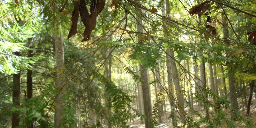 Numerous hemlock trees can be spotted at Hemlock Bluff Trail – TVA
