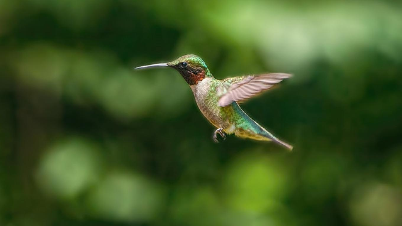 Woodlands Nature Station is home to the annual Hummingbird Festival. – Land Between the Lakes Flickr