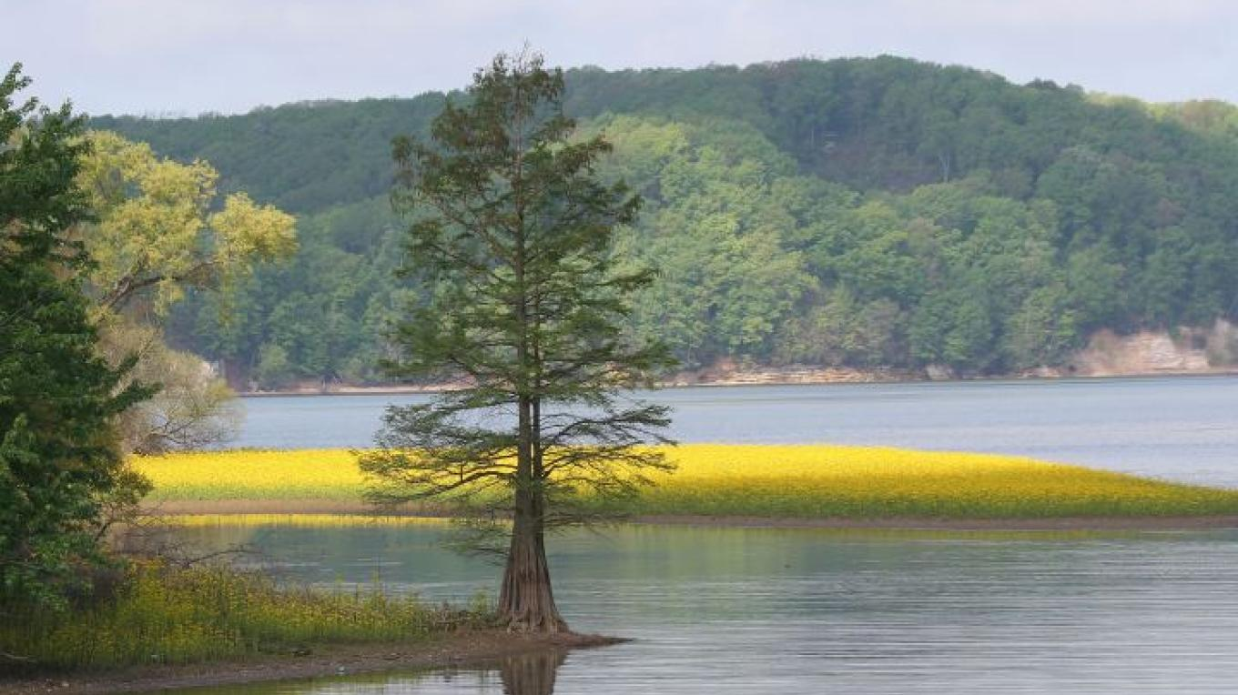 Scenic view of Tennessee National Wildlife Refuge. – Clayton Ferrell