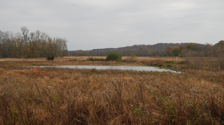 Habitat at Yuchi Refuge – Scott Somershoe
