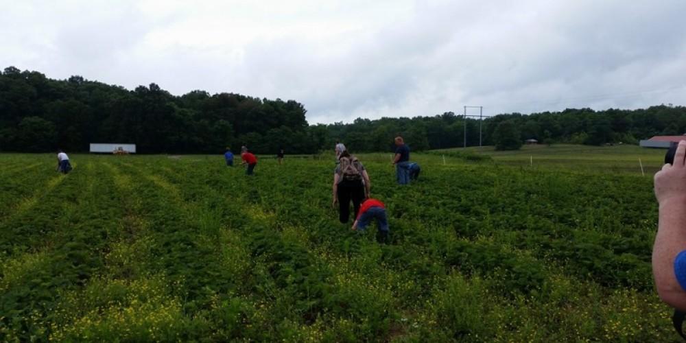 Black Family Farms