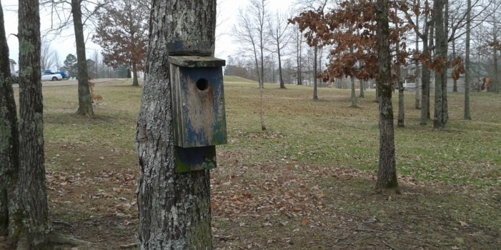 10 year old birdhouse ready for rehab. – James Gibson