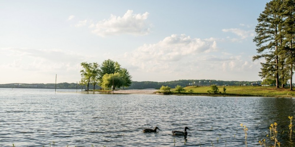 Pickwick Landing State Park is home to many species of birds. Over 145 species of birds have been identified in the park. – Cari Griffith