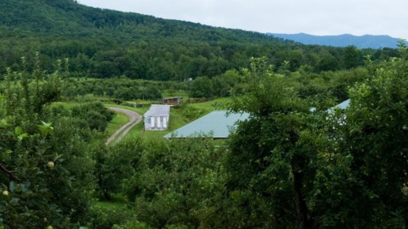 Carver's Orchard and Carver's Applehouse Restaurant set in the middle of this beautiful family owned orchard. – Molly Gilbert