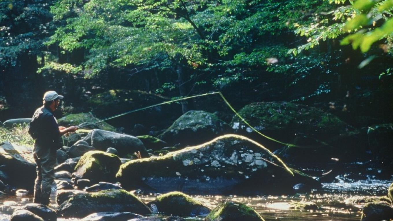 Fly fishing along Little River – Townsend Visitors Center
