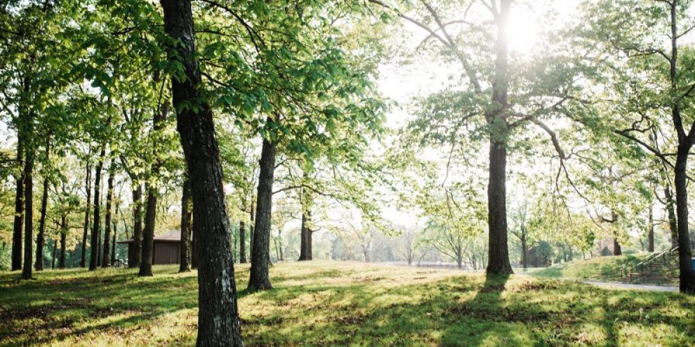 Paris Landing State Park – Cari Griffith