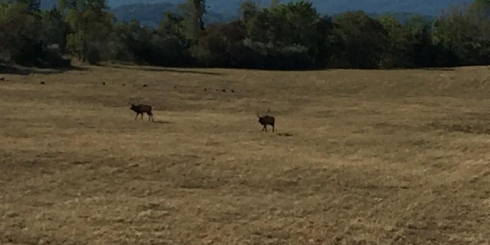Elk sightings at the Elk Tower off the TWRA trails