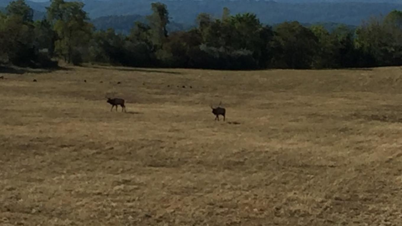Elk sightings at the Elk Tower off the TWRA trails
