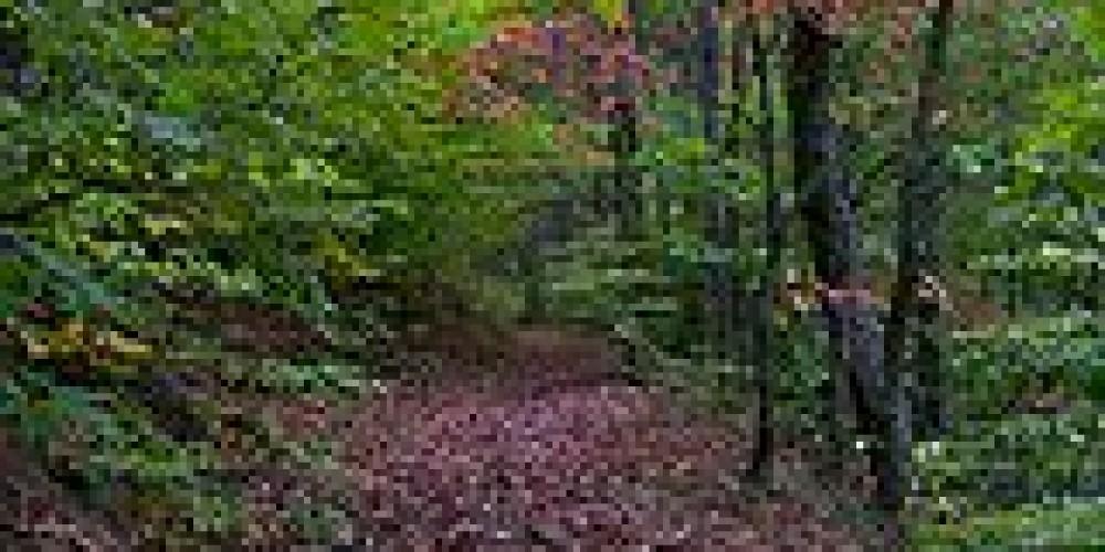Trails at Big Ridge – Jennipher