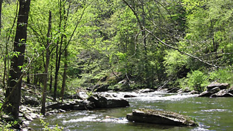 Tellico River beauty