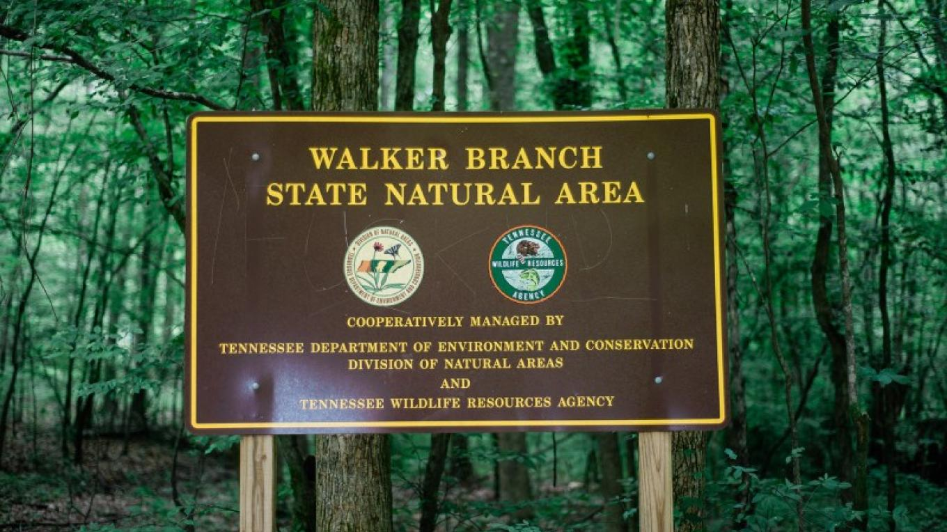 Walker Branch State Natural Area – Cari Griffith