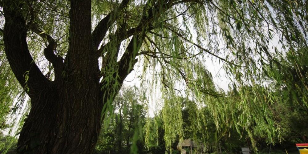 Betsy Ligon Park – Cari Griffith
