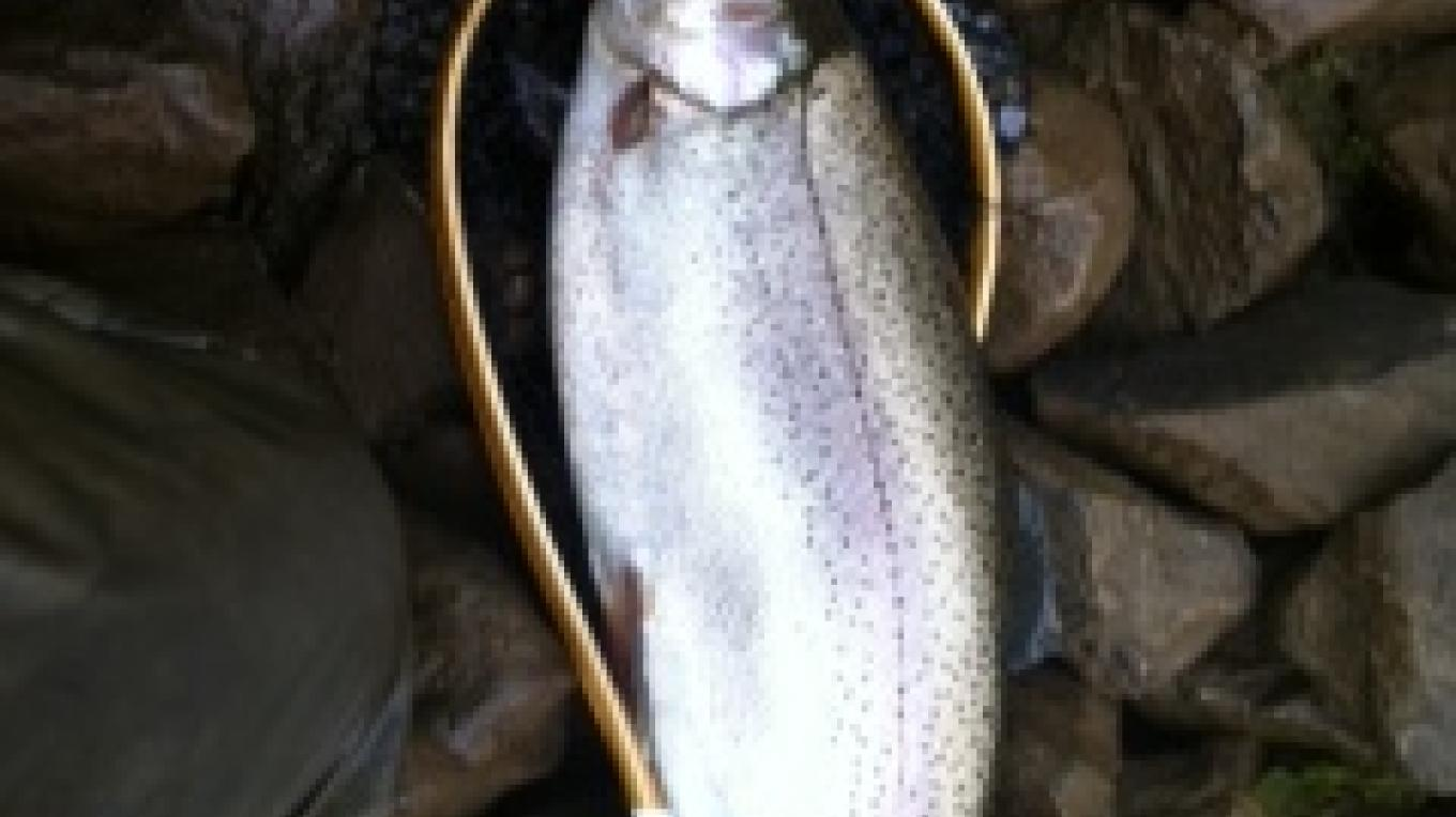 Fly fishing trout on the Clinch – Steve Thompson