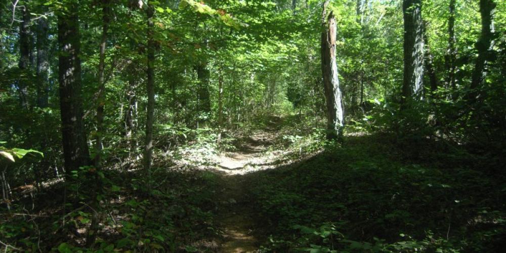 Big Ridge Small Wild Area Trail – TVA