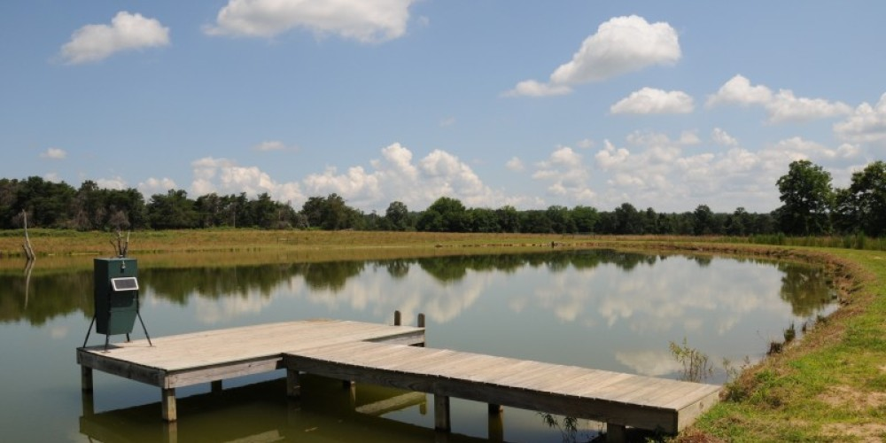 Fishing in the three acre pond is one of the pastimes available while staying at Bear Creek Log Cabins. – John Dersham