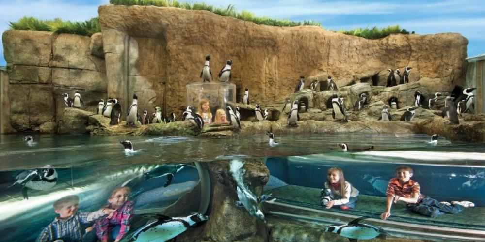 Penguin Playhouse – Charlie Brooks