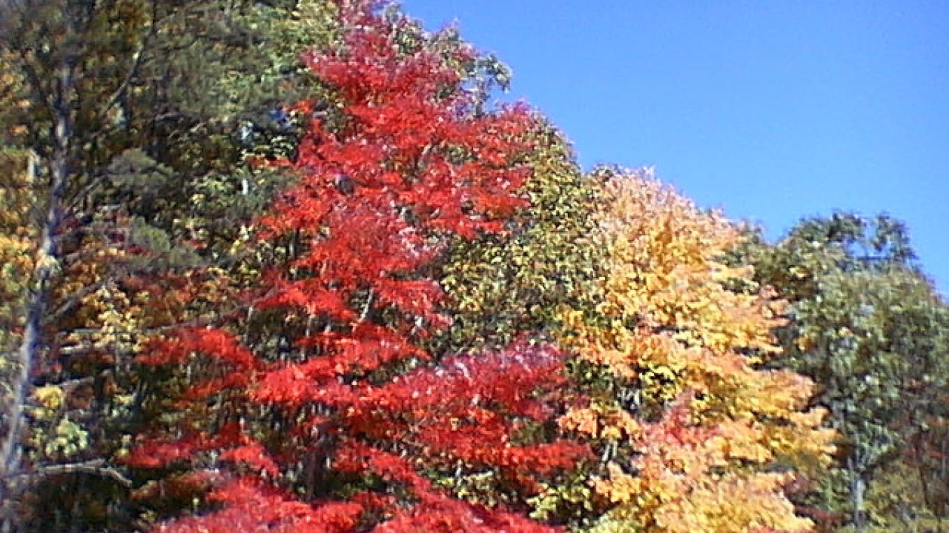 Fall color along Foothills Parkway west – Townsend Visitors Center