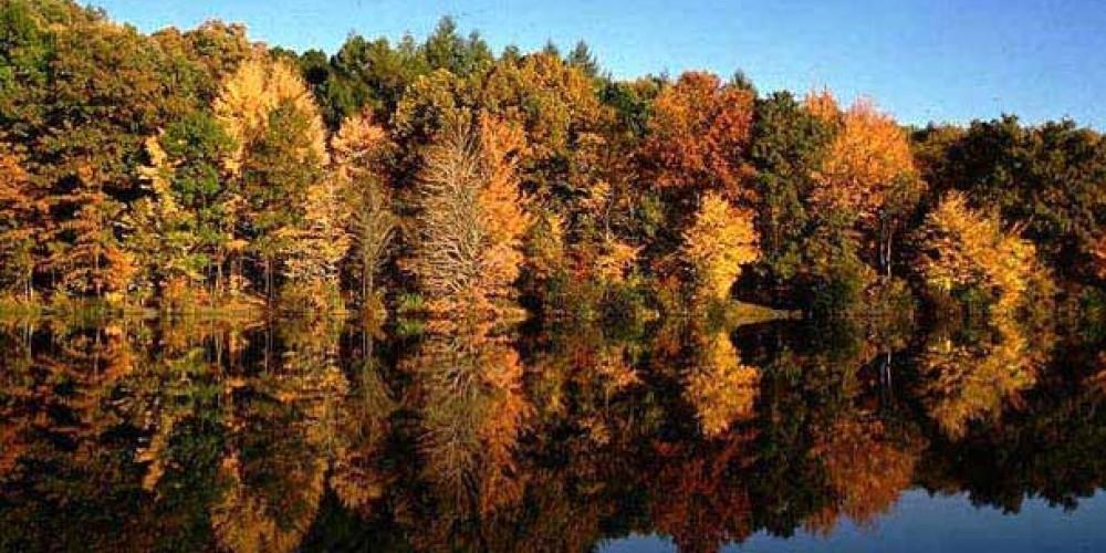Fall Colors on Norris Lake
