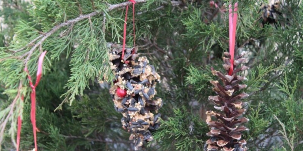 Our feathered friends love these bird feeders. – sHayden/USFWS