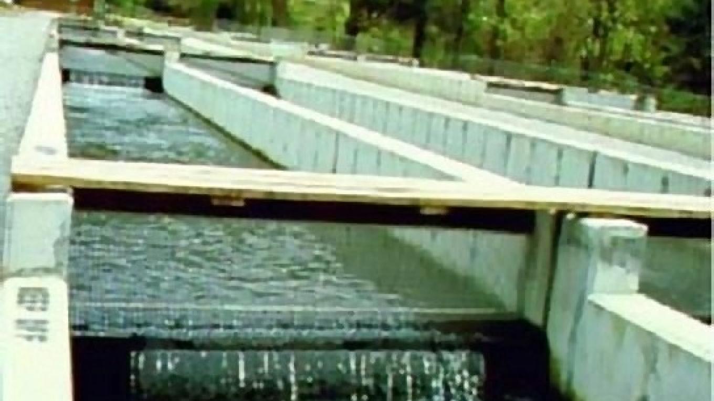 Rearing Pools