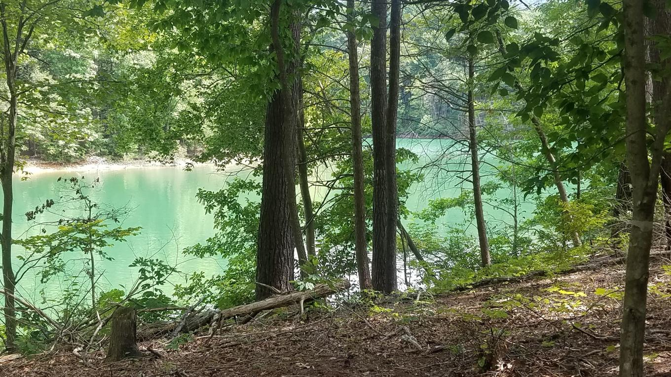 Emerald-hued adventures await on South Holston Lake.